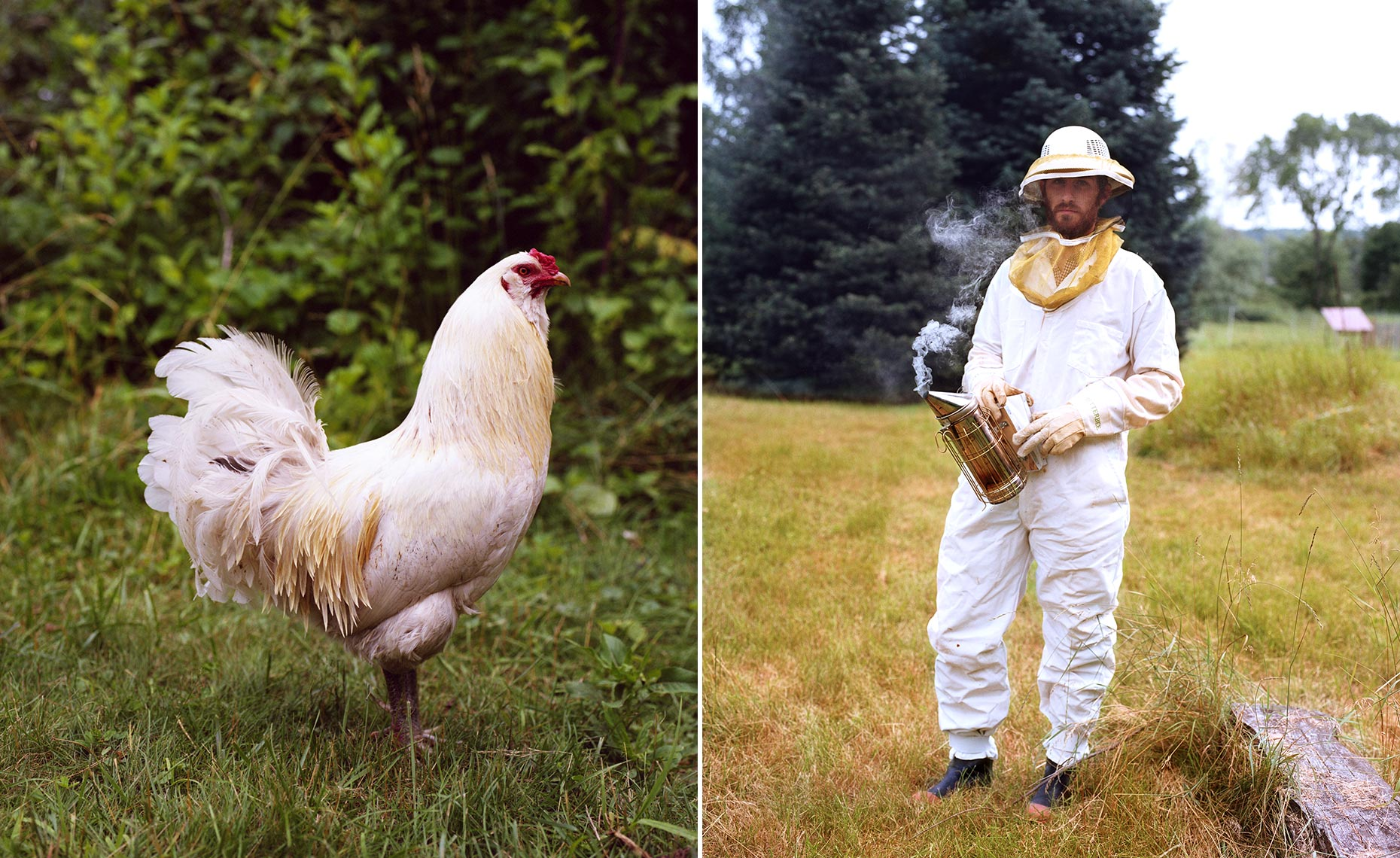 beekeeper chicken farm portrait green